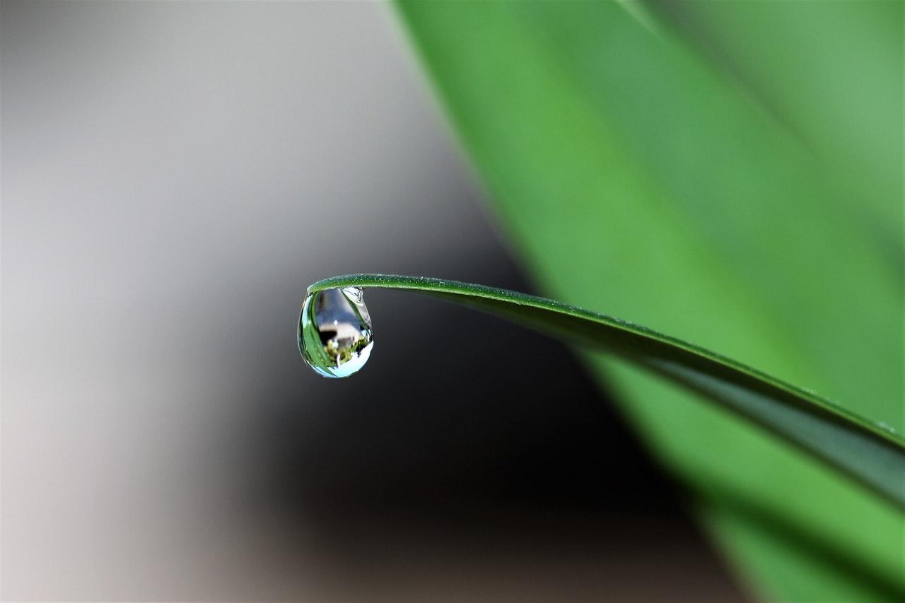 Zalety nawadniania kropelkowego – czy sprawdzi się w Twoim ogrodzie?
